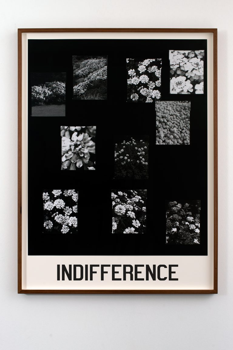 indifference20x30